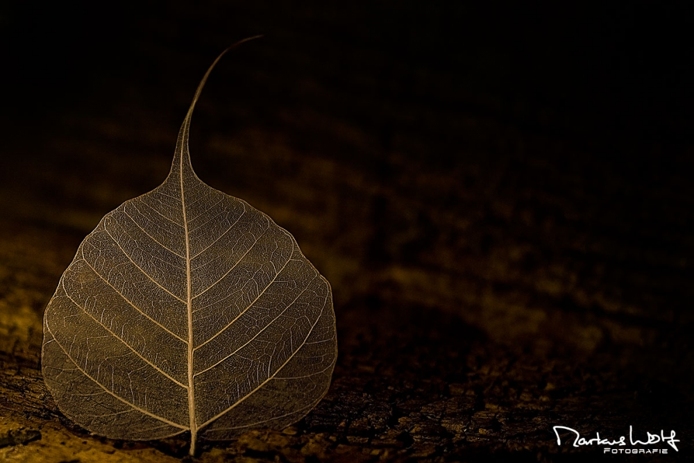 Markus Wolf Fotografie Fotograf